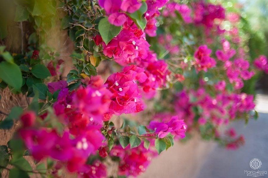 Morrocan villa flowers