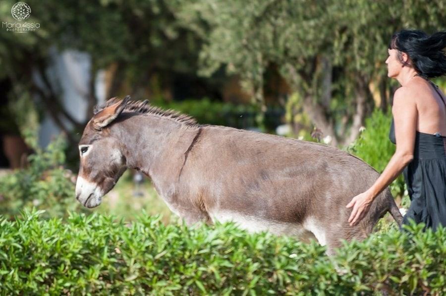 Dawn chasing off Doris the donkey