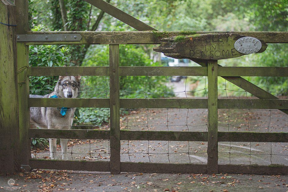 Groom's dog looking through a gate fence
