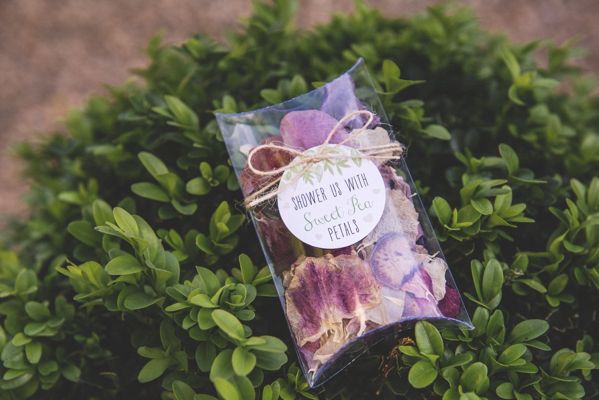 Close up of the confetti - little packages of sweet pea petals