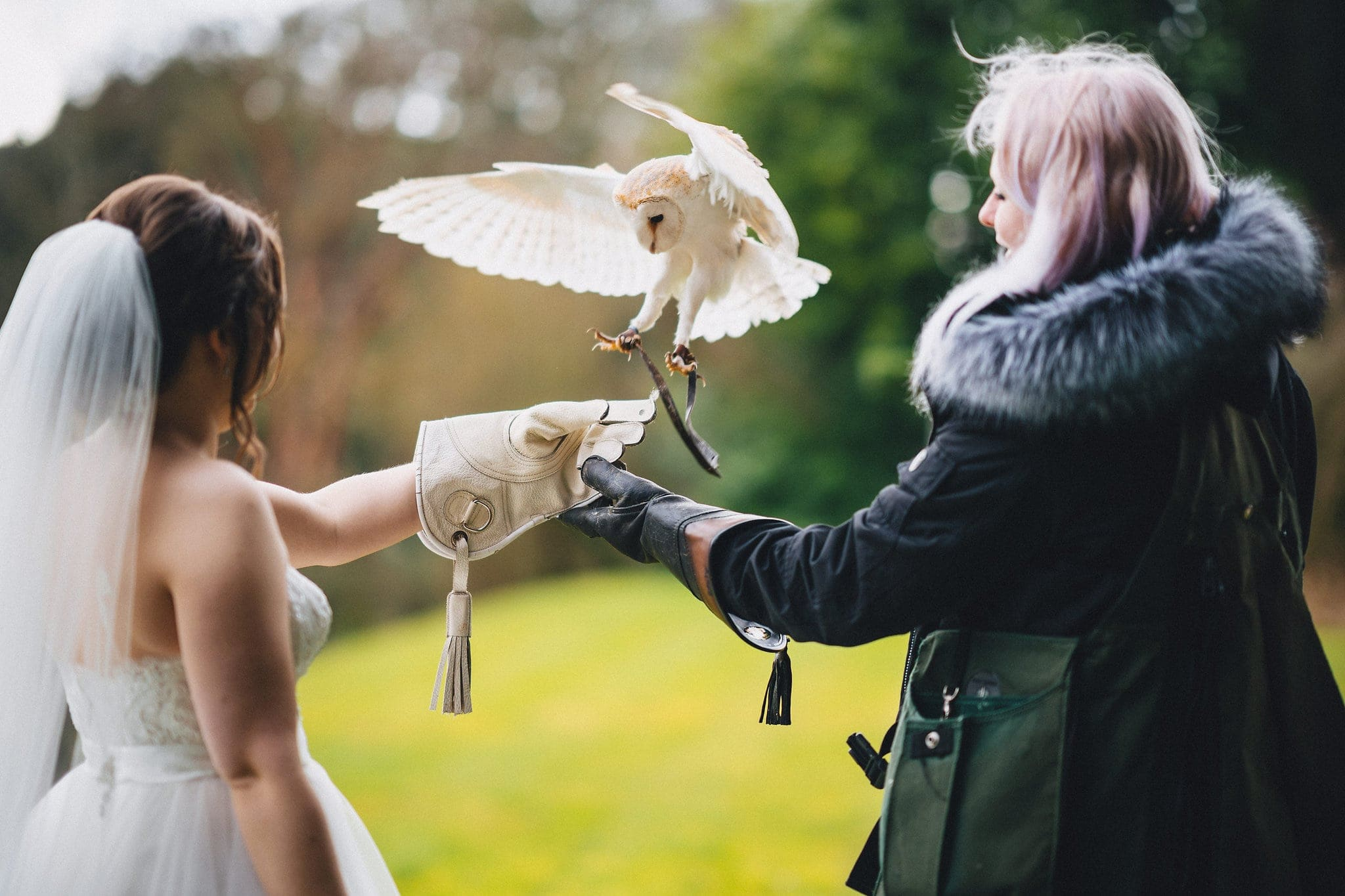 Barn owl flies onto bride's glove