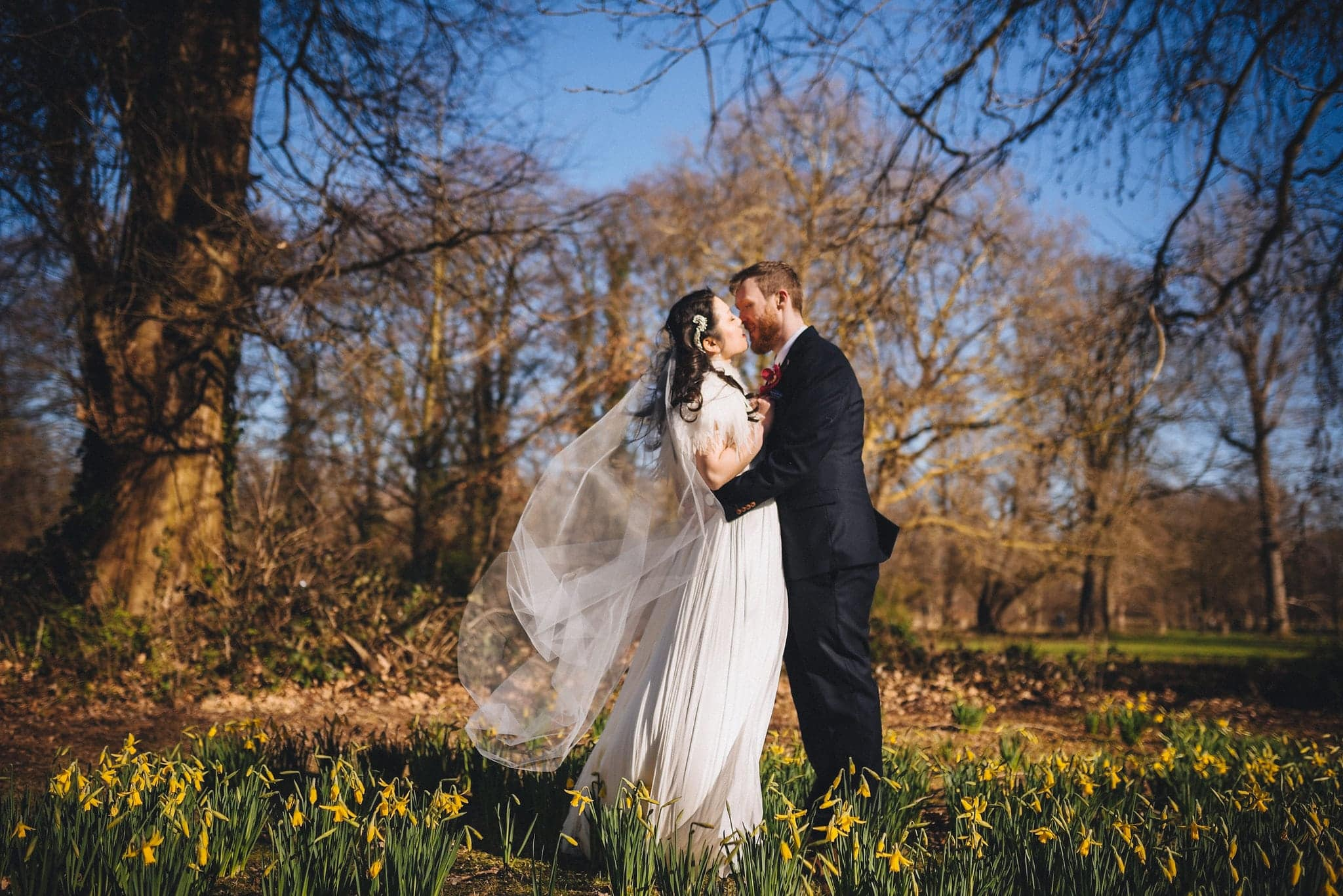 Bride and groom kiss among daffodils at Morden Hall