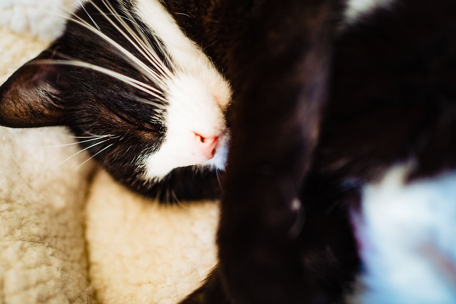 Black and white cat sleeping close up