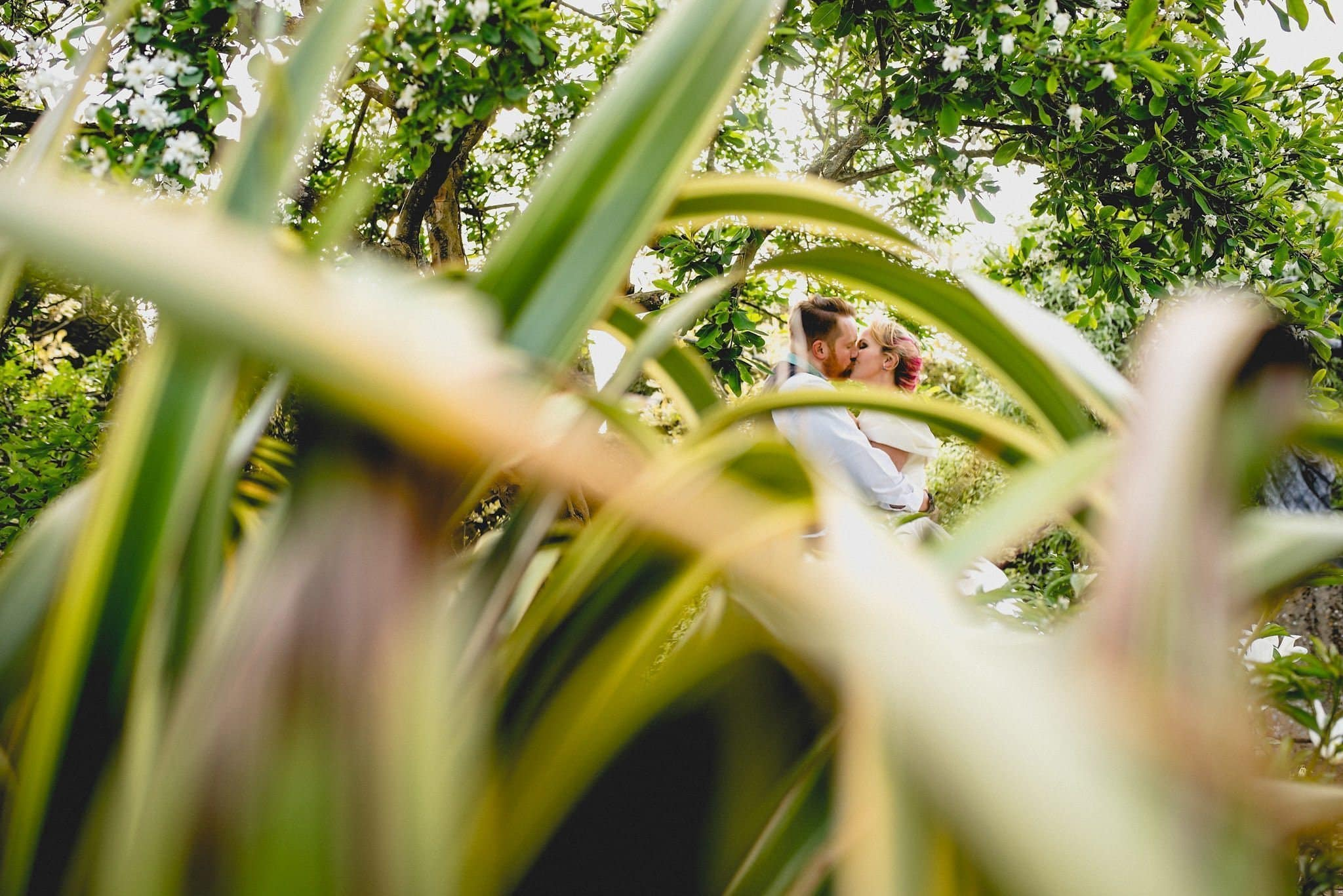A shot taken through the leaves of a plant in the grounds of Birtsmorton Court, with Hatty and Steven seen kissing in the background